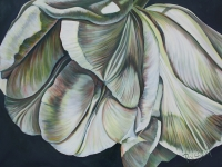 Angel Wing Tulips SOLD