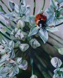 Ladybug on Chive   $800    Framed