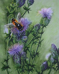 Hoverfly - SOLD