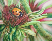 Ladybug on Coneflower  $800 Framed