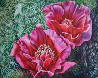 Pink Prickley Pear  $800 Framed
