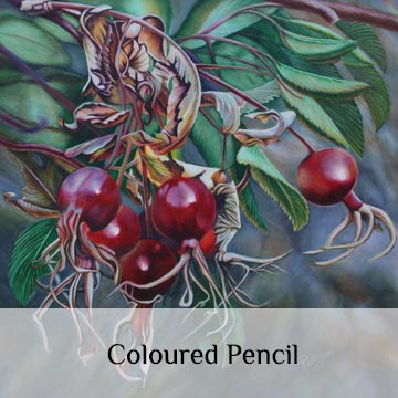 Coloured Pencil Art